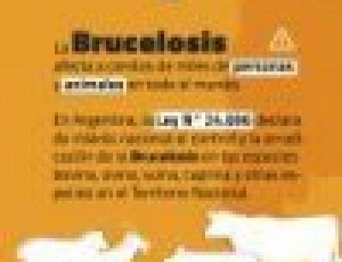 """Brucelosis: """"Los planes de control y erradicación tienen un importante beneficio"""""""